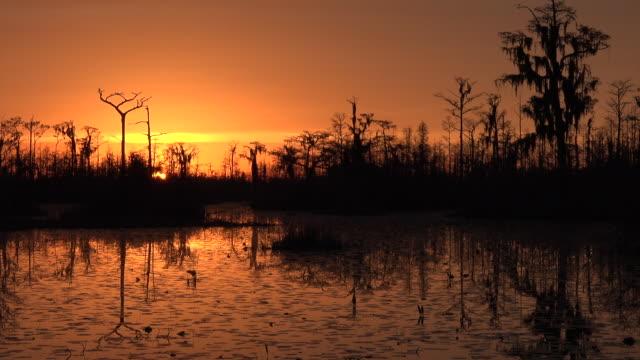 georgia okefenokee dramatic setting sun and orange sky pan - okefenokee national wildlife refuge stock videos and b-roll footage