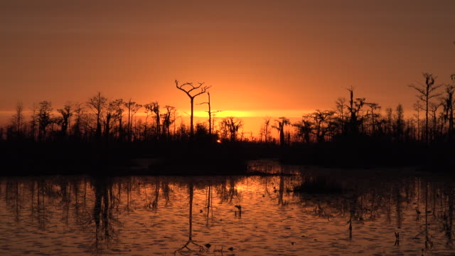 georgia okefenokee fantastic orange sunset sky.mov - okefenokee national wildlife refuge stock videos and b-roll footage