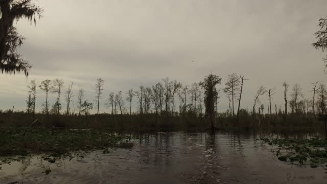 georgia okefenokee forest by swamp - okefenokee national wildlife refuge stock videos and b-roll footage