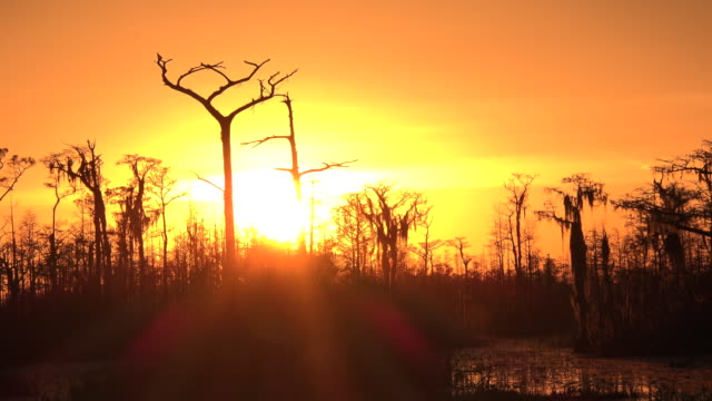 georgia okefenokee hot sun in swamp - okefenokee national wildlife refuge stock videos and b-roll footage