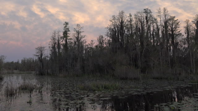 georgia okefenokee little pink clouds over swamp pan - okefenokee national wildlife refuge stock videos and b-roll footage