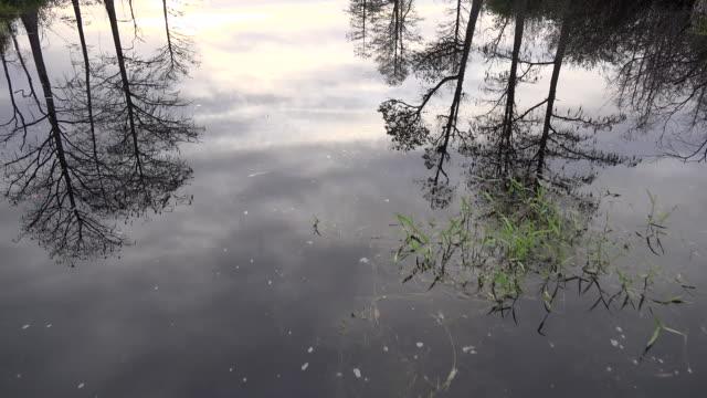 georgia okefenokee looking down at reflections - オケフェノキー国立野生生物保護区点の映像素材/bロール