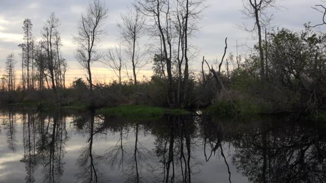 georgia okefenokee moving past trees - オケフェノキー国立野生生物保護区点の映像素材/bロール