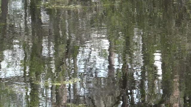 georgia okefenokee reflections in scummy water pan - オケフェノキー国立野生生物保護区点の映像素材/bロール