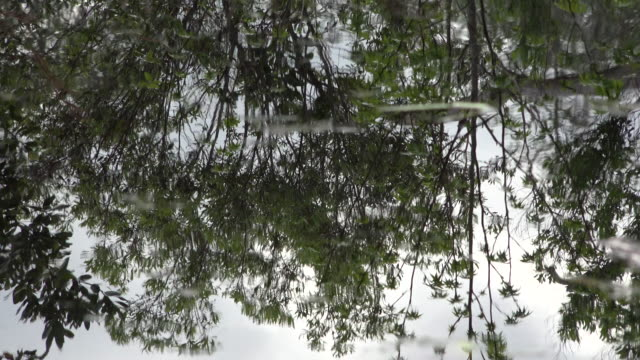 georgia okefenokee reflections in swamp water - okefenokee national wildlife refuge stock videos and b-roll footage