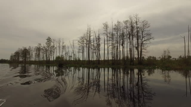 georgia okefenokee reflections in water - okefenokee national wildlife refuge stock videos and b-roll footage