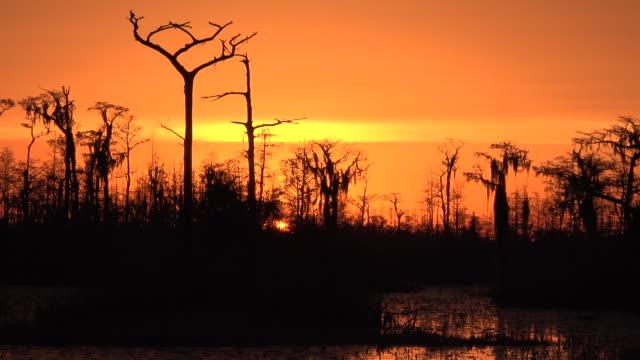 georgia okefenokee setting sun orange sky zooms out.mov - okefenokee national wildlife refuge stock videos and b-roll footage