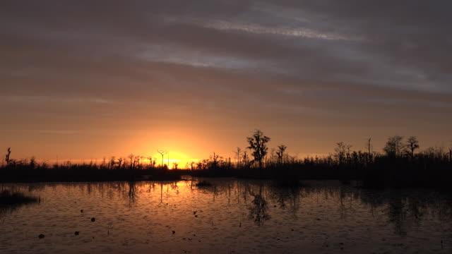 georgia okefenokee setting sun over swamp.mov - okefenokee national wildlife refuge stock videos and b-roll footage