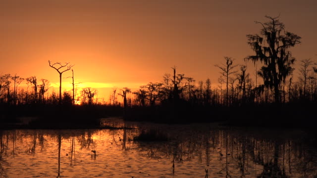georgia okefenokee sky turns orange pan and zoom - okefenokee national wildlife refuge stock videos and b-roll footage