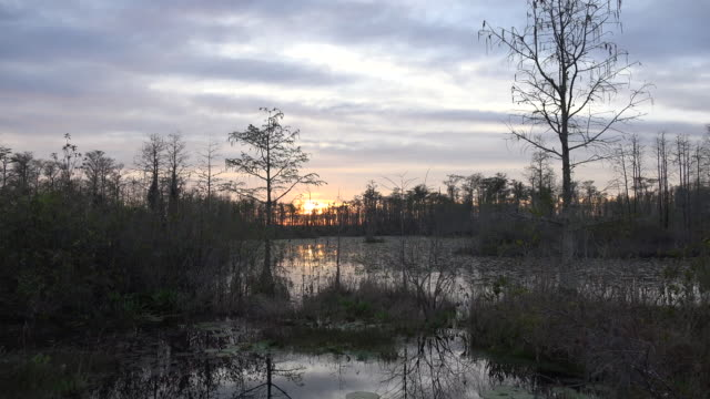 georgia okefenokee sun drops lower over swamp.mov - ジョージア州点の映像素材/bロール