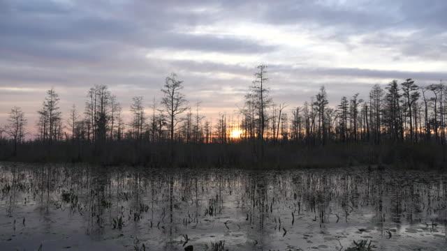 georgia okefenokee sun near the horizon in a swamp.mov - okefenokee national wildlife refuge stock videos and b-roll footage
