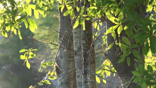 georgia okefenokee sun on trees - okefenokee national wildlife refuge stock videos and b-roll footage