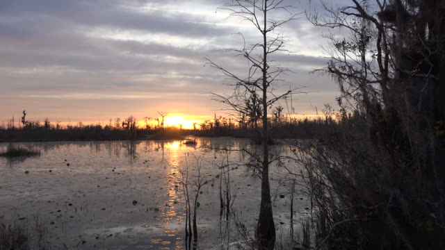 georgia okefenokee sun sinking as boat passes swamp view.mov - okefenokee national wildlife refuge stock videos and b-roll footage