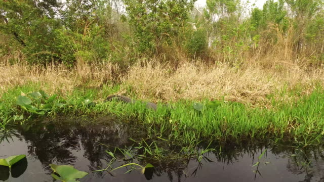 vídeos y material grabado en eventos de stock de georgia okefenokee swamp passing view - pantano zona húmeda
