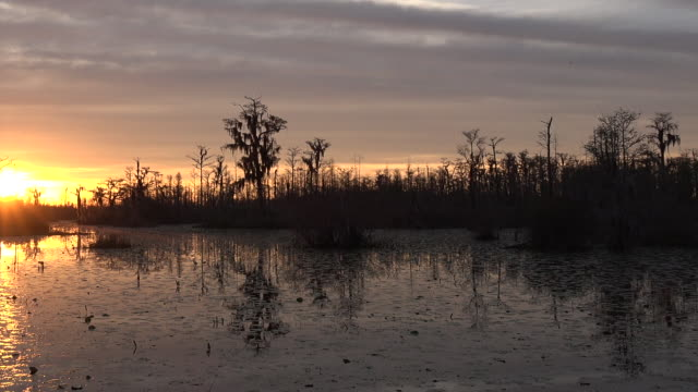 georgia okefenokee swamp with setting sun pan - okefenokee national wildlife refuge stock videos and b-roll footage