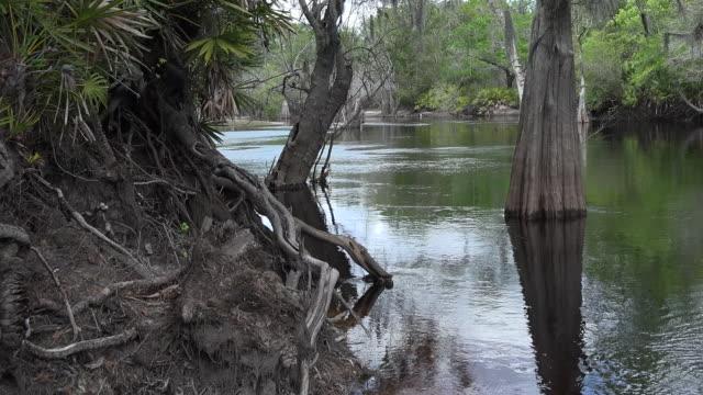 vídeos y material grabado en eventos de stock de georgia okefenokee swampy water pan - pantano zona húmeda