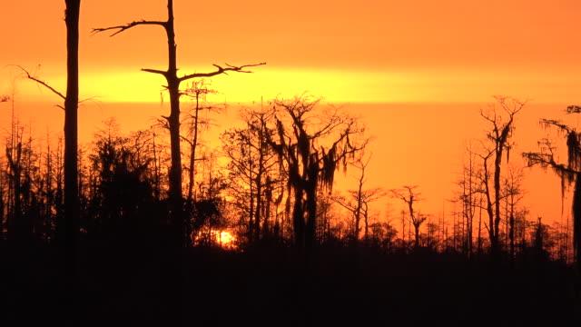 georgia okefenokee zooms on orange sunset.mov - okefenokee national wildlife refuge stock videos and b-roll footage