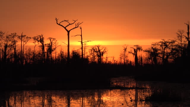 georgia okefenokee zooms out from sunset - okefenokee national wildlife refuge stock videos and b-roll footage