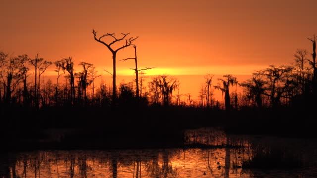 georgia okefenokee zooms out from sunset - オケフェノキー国立野生生物保護区点の映像素材/bロール