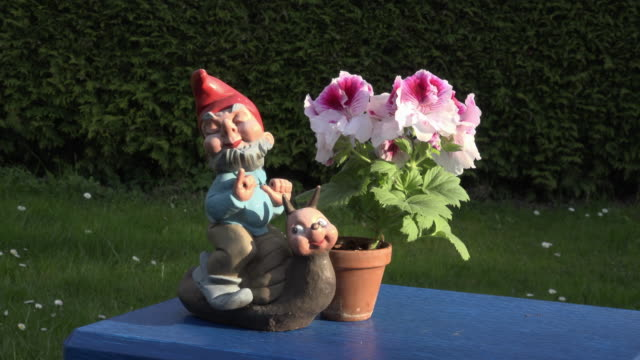Geranium with garden gnome on slug