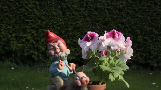 ZO / Geranium with garden gnome on slug
