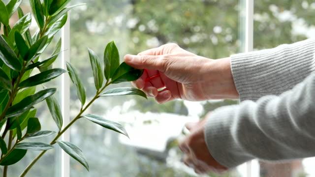 geriatric nursing - senior woman touching leaf - 観葉植物点の映像素材/bロール