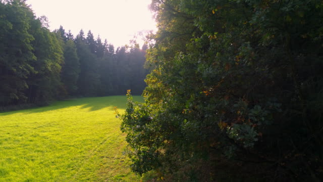 German Mixed Forest In The Autumn Light