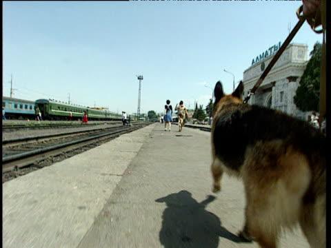German Shepherd drugs sniffer dog and policeman on patrol Uzbekistan