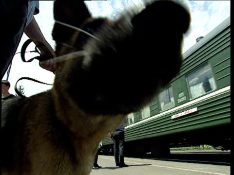 German Shepherd drugs sniffer dog licks camera while on patrol on railway platform Uzbekistan