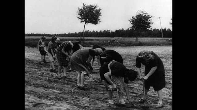 / german women working in the field to grow food / man with horse and plow / men bailing hay growing the food supply in post war germany on january... - bailing hay stock videos & royalty-free footage