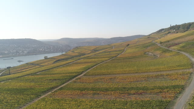 Germany Drone wine farming