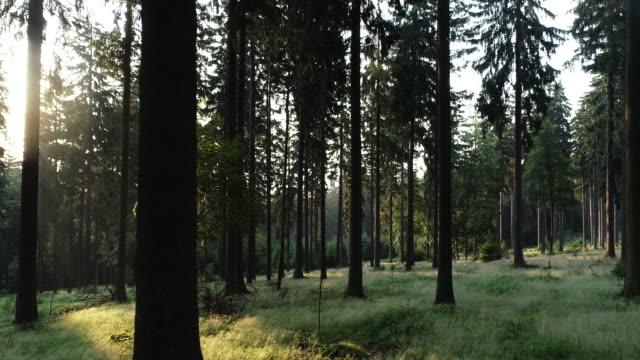 germany feldberg sunrise - hesse germany stock videos & royalty-free footage
