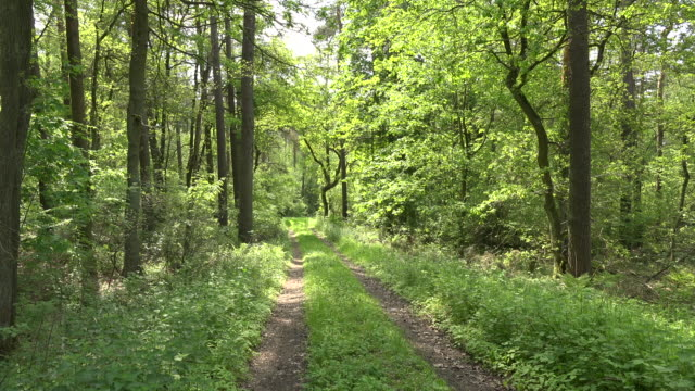 vídeos de stock, filmes e b-roll de germany lane in sunny woods - árvore de folha caduca