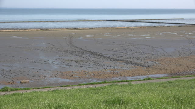 Germany Wadden Sea many footprints in mud