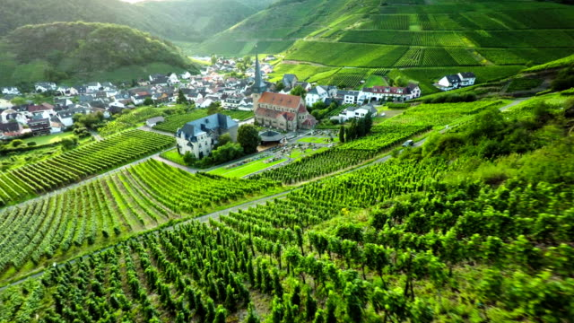 AERIAL: Germany Wine Country Vineyard Field