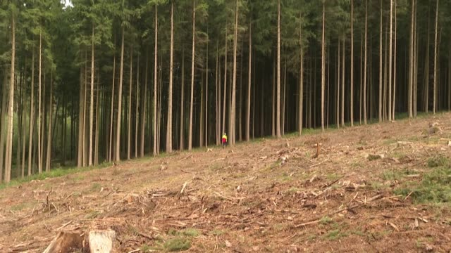 germany's forests have long been treasured by its people so the country has reacted with alarm and dismay as a beetle infestation has turned climate... - infestation stock videos & royalty-free footage