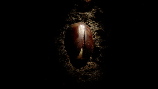 """Germinating acorn, timelapse"""