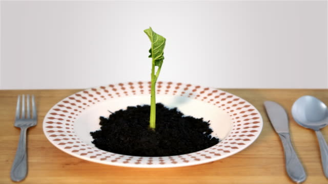 vídeos de stock, filmes e b-roll de germinating comida - processo vegetal