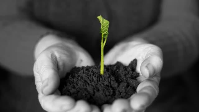vídeos de stock, filmes e b-roll de germinating planta em mãos - semente