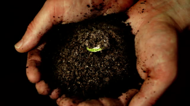 Germinating plant in hands