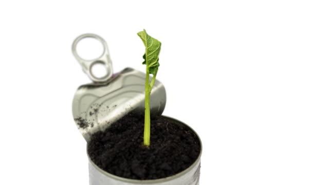 vídeos de stock, filmes e b-roll de germinating planta - processo vegetal