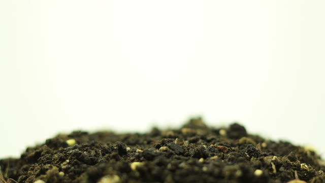 germinating plant - origins stock videos and b-roll footage