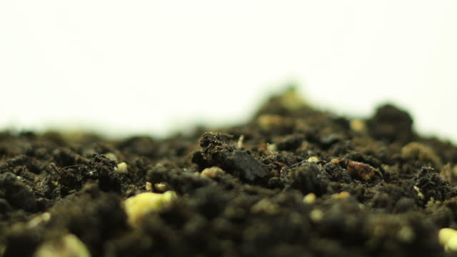 germinating plant - bud stock videos & royalty-free footage