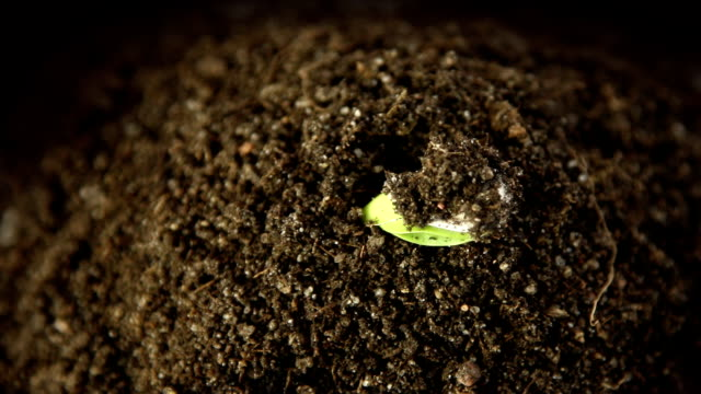 germinating plant - germinating stock videos & royalty-free footage