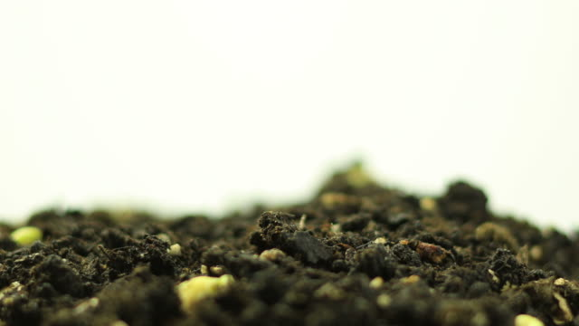 germinating plants - bean stock videos & royalty-free footage