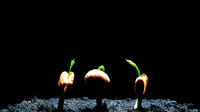 germinating seed time lapse - germinating stock videos & royalty-free footage