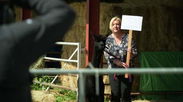 geronimo the alpaca with his owner helen macdonald in gloucestershire, there is a campaign to save him after the government said he must be culled... - mammal stock videos & royalty-free footage