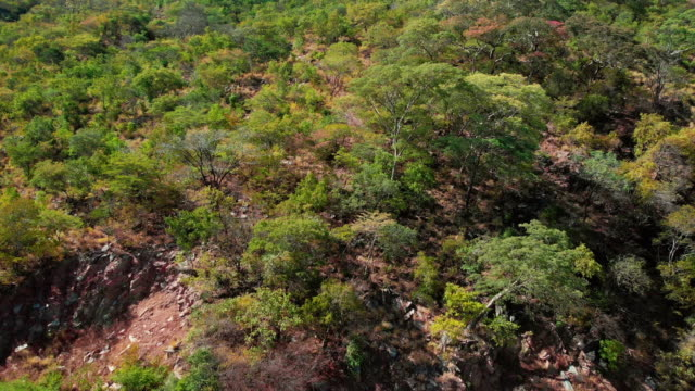 vídeos de stock, filmes e b-roll de começ mais perto e longe da região selvagem africana - áfrica meridional