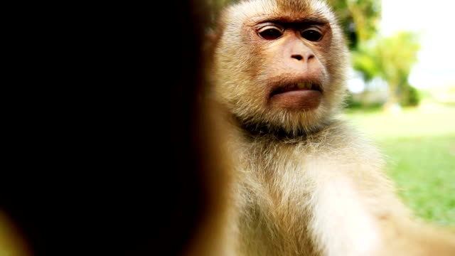 Getting in touch with a primate