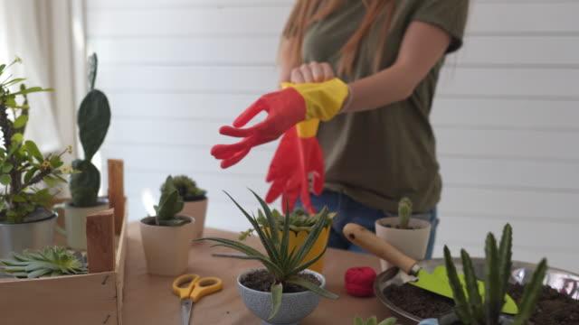 vorbereitung auf botanik-arbeiten - gartenhandschuh stock-videos und b-roll-filmmaterial